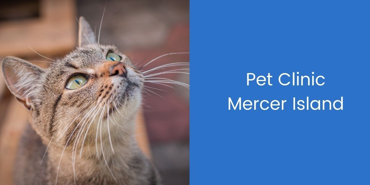 Pet-Clinic-Mercer-Island