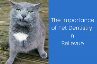 The-Importance-of-Pet-Dentistry-in-Bellevue
