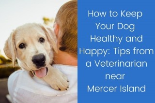 How-to-Keep-Your-Dog-Healthy-and-Happy_-Tips-from-a-Veterinarian-near-Mercer-Island