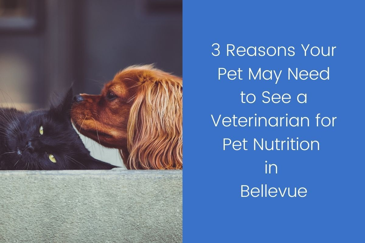 3-Reasons-Your-Pet-May-Need-to-See-a-Veterinarian-for-Pet-Nutrition-in-Bellevue