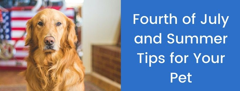 Fourth-of-July-and-Summer-Tips-for-Your-Pet