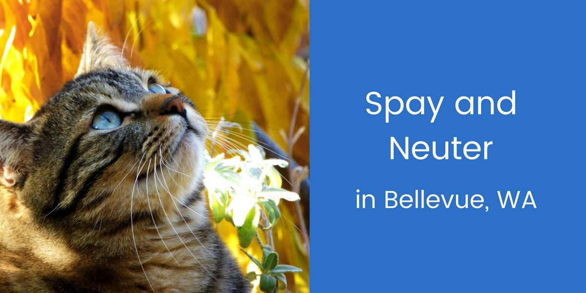 Spay-and-Neuter-in-Bellevue-WA