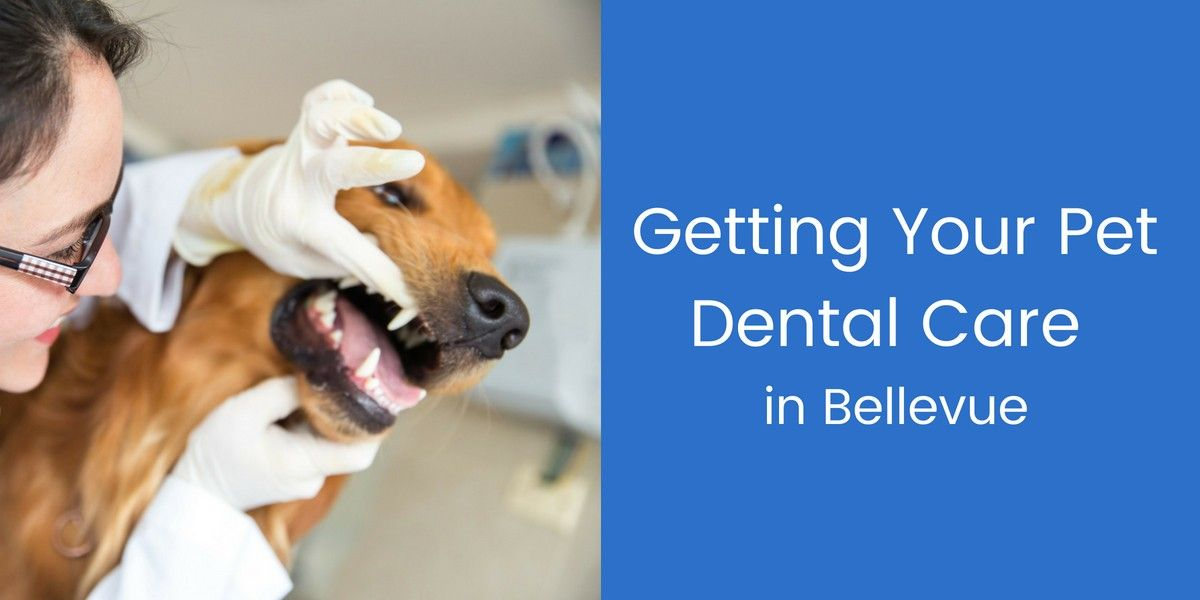 Getting-Your-Pet-Dental-Care-in-Bellevue