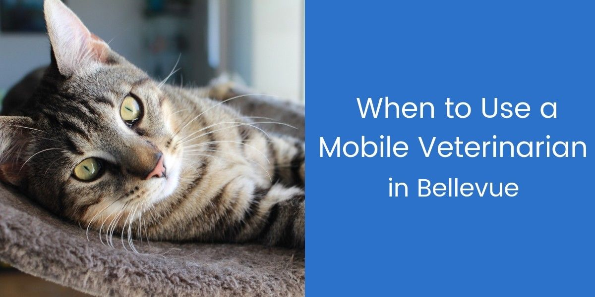When-to-Use-a-Mobile-Veterinarian-in-Bellevue