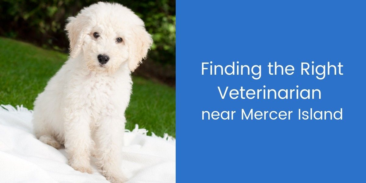 Finding-the-Right-Veterinarian-Near-Mercer-Island